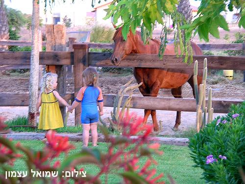 חוות סוסים ללא מילים...